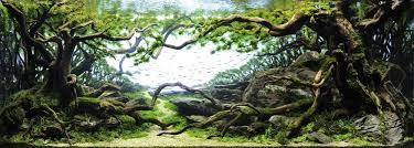 japanese aquascape tokyo aquascape union makes aquarium art all about japan