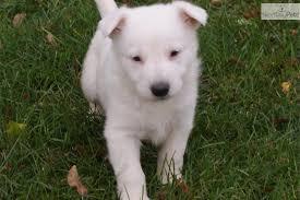 image german shepherd puppy picture b397b9c9 ae46 48b1 ba55