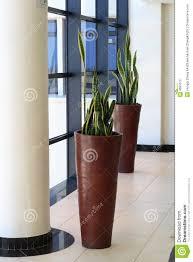 office plants stock photo image 4681070