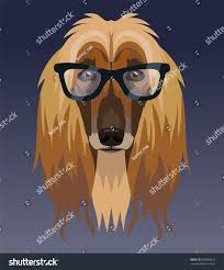afghan hound breed vector afghan hound breed dog portrait stock vector 609580616