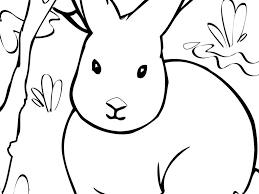 arctic animals coloring pages for preschoolers coloring page for