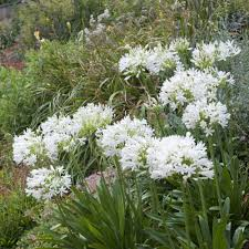 decoration minerale jardin créer un jardin de graviers le magazine u2014 gamm vert