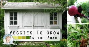 vegetables you can grow in the shade empress of dirt