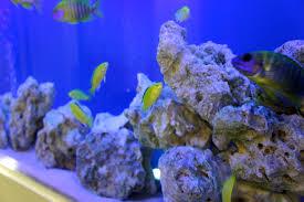 aquafront aquariums portfolio
