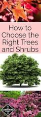 best 25 best trees for privacy ideas on pinterest privacy