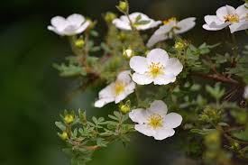 small white flowers small white flowers by svitakovaeva on deviantart