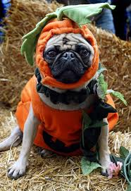 dog costumes spirit halloween 22 dogs in halloween costumes who really aren u0027t happy about it