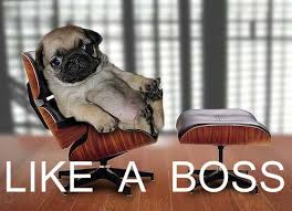 Like A Boss Know Your Meme - image 115654 like a boss know your meme