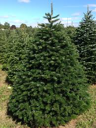 hill farms types of christmas trees