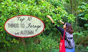 plants native to ireland top 10 things to forage in autumn and here we are