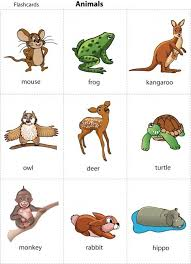 animals picture for for print printable animal cards