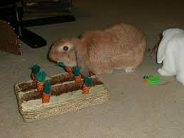don u0027t buy a bunny for easter u2026 u2026 u2026 u2026 u2026 u2026bunnies are a holes