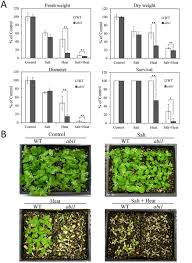 High Heat Plants Aba Is Required For Plant Acclimation To A Combination Of Salt And
