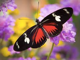 today marks the day of get some butterflies in your