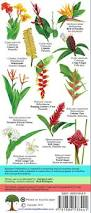 costa rica tropical flowers identification guide laminated