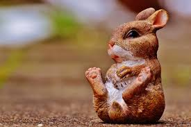 free images sweet cute wildlife decoration spring mammal
