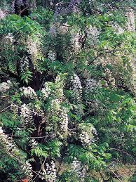 Indoor Fragrant Plants Types Of Fragrant Climbing Plants Hgtv