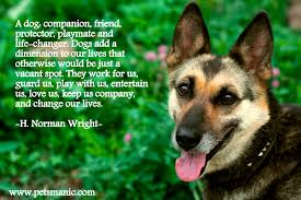 quotes about friendship enduring download quotes about dogs and friendship homean quotes