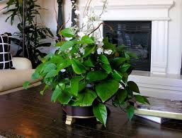 indoor house plants winter care www coolgarden me