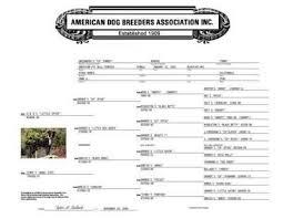 american pit bull terrier registry image006 jpg