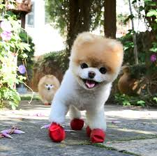 the 1709 blog the world u0027s cutest dog too commonly shaped to be
