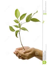 holding small tree stock image image of environmental 3012827