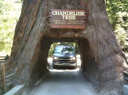 Chandelier Drive Through Tree The Chandelier Tree