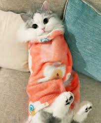 Dat Ass Cat Meme - 9 twitter pretty kitty pinterest