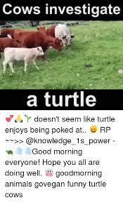 Funny Turtle Memes - 25 best memes about funny turtles funny turtles memes