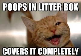 Cool Cat Meme - cool cat craig imgur