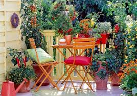 What Vegetables Need A Trellis Easy Container Vegetables For Balcony U0026 Rooftop Garden Container