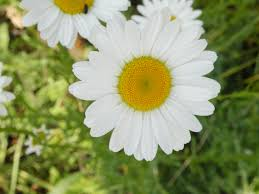 Flowering Plants Native To Ohio Ohio Weedguide