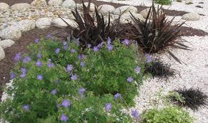 decoration minerale jardin jardin minéral créer un jardin de gravier