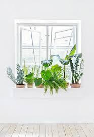 Indoor Herb Pots Window Box - 215 best indoor plants images on pinterest gardening plants and