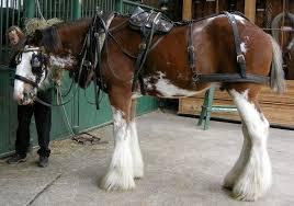 horse saddle harness saddle wikipedia