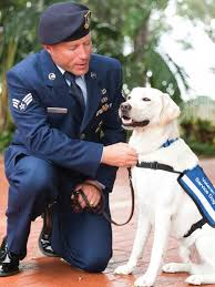 Dogs For The Blind Jobs Southeastern Guide Dogs