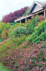 176 best hillside gardening images on pinterest landscaping