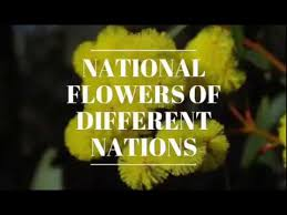 Flower Of Images - what is the name of national flower of nepal u003cbr u003e u003ciframe title