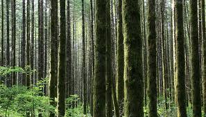 Oregon Forest images Man of depravity dense oregon forest jpg