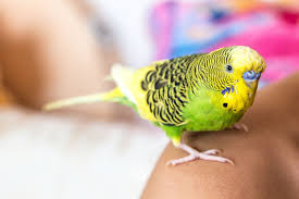 Parrot Decorations Home How Much Does It Cost To Buy And Care For A Pet Bird