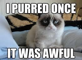 Grumpy Cat Meme Pictures - purred once grumpy cat meme