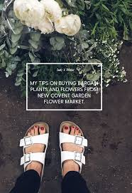 Cheapest Flowers My Tips On Buying Bargain Plants And Flowers From New Covent