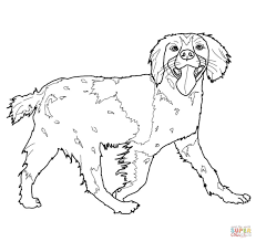 english cocker spaniel coloring page free printable coloring pages