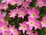 ความสวยงามของดอกไม้ หนุนนำความสดใสของชีวิต.. - GotoKnow