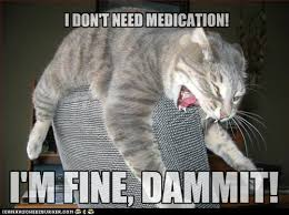 Anxiety Cat Meme - you take em lolcats lol cat memes funny cats funny cat