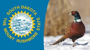 state bird of south dakota usa state bird south dakota ring necked pheasant youtube