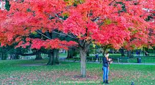boston fall foliage tours 7 sites