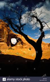 Utah travel reservation images Ear of the wind rock window arch tree silhouette landscape travel jpg