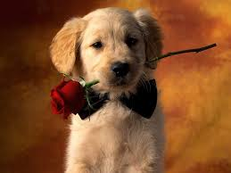 cute puppies 2 wallpapers cute puppy wallpaper