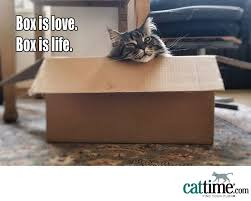 Cardboard Box Meme - 45 more hilarious cat memes to make your day better cattime